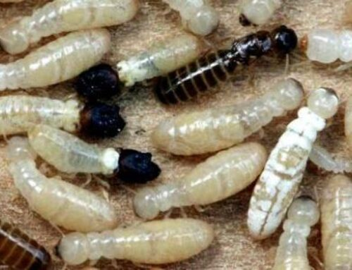 شركة مكافحة الرمة في ام القيوين |0507260833 |ابادة الحشرات