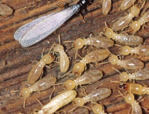 شركة مكافحة الرمة في دبي |0507260833 |ابادة الحشرات